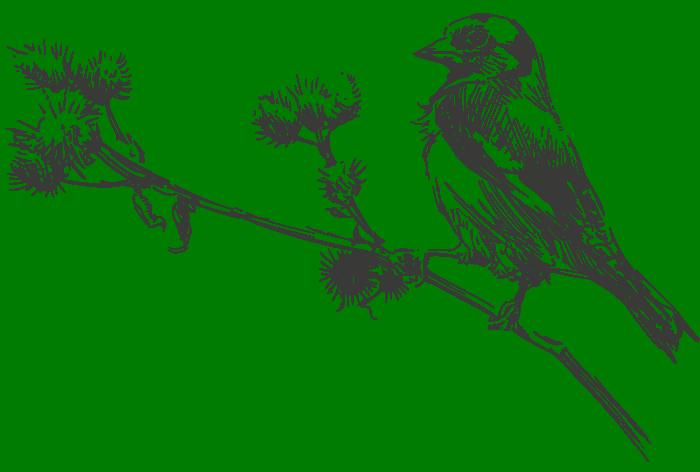 Illustration Vogel auf Zweig