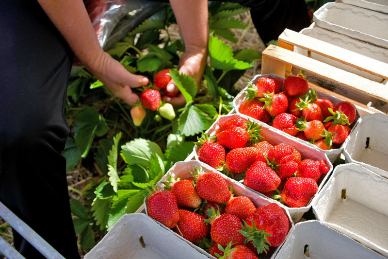 Erdbeeren Markt